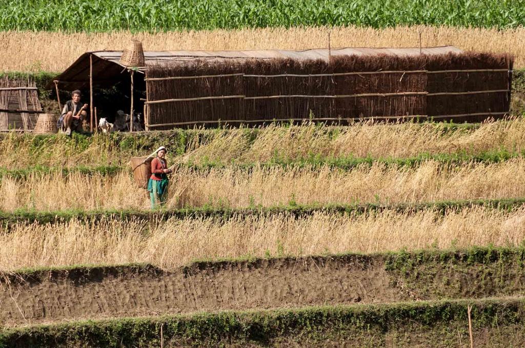 ASP_Nepal_Farmers